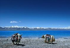 Tibet is one of the most beautiful places on the face of earth. Thousands of travelers come to explore this amazing place every year from many parts of the world. Its cloudy mountains, tranquil lakes, clear blue sky, snow and Mt. Everest are some of the reasons that excite tourists to visit it every year.