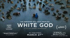 """White God - Kornel Mundruczo's newest film is a story of the indignities visited upon animals by their supposed """"human superiors,"""" but it's also an brutal, beautiful metaphor for the political and cultural tensions sweeping contemporary Europe. When young Lili is forced to give up her beloved dog Hagen, because it's mixed-breed heritage is deemed 'unfit' by The State, she and the dog begin a dangerous journey back towards each other..."""