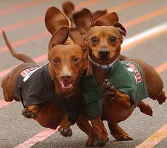 wiener dog race @Niki Jones i don't think Shadow & Elvis looked this good in their race!!!  LMAO!!