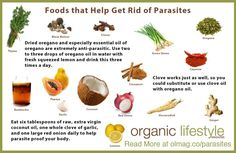 Foods That Help Rid Body Of Parasites. - Foods That Help Rid Body Of Parasites…. Mucoid Plaque, Smoothie, Parasite Cleanse, Intestinal Parasites, Cleanse Diet, Diet Detox, Body Detox, Juice Cleanse, Organic Lifestyle