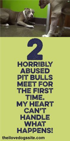 2 Horribly Abused Pit Bulls Meet For The First Time.... My Heart Can't Handle What Happens!!! <3