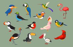 Aleksei Kruhlenia bird illustrations: This collection is inspired by different ranks of the most popular bird species in the world. Also i included some common colorful birds that i personally like =)