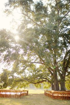 wedding ceremony under a tree - looks nice even without decor