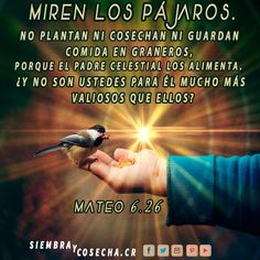 MATEO 6:26 SITIO WEB:  http://siembracr.wixsite.com/siembracr