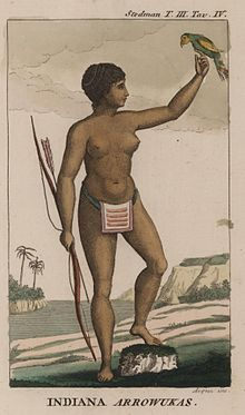 The Arawak people include the Taíno, who occupied the Greater Antilles and the Bahamas (where they were known as Lucayan); the Nepoya and Suppoya of Trinidad;[1][2] the Lokono of Guyana; the Igneri, who preceded the Carib in the Lesser Antilles; together with related groups (including the Lucayan) who lived along the northeastern coast of South America, as far south as what is now Brazil. The Lucayan (Arawak) were the natives whom Christopher Columbus encountered in 1492 when he first…