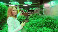 BBC News - Colorado's marijuana firms beg banks to take their cash
