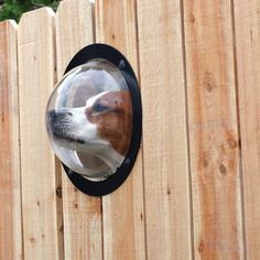 Fence Window for Dogs | The Mens Gift Guide - Gift Ideas For Men, Dads, Groomsmen and more.