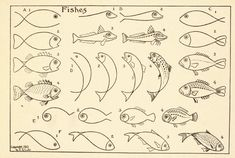 how to draw fish.
