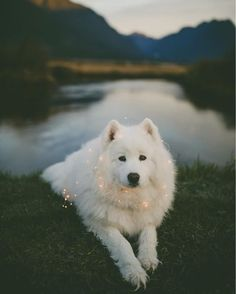 25 Most Beautiful Dog Pictures - Wolfsong - Hunde bilder Beautiful Dog Pictures, Most Beautiful Dogs, Animals Beautiful, Beautiful Beautiful, Cute Baby Animals, Animals And Pets, Funny Animals, Wild Animals, Cute Puppies