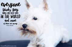 My dog is the absolute best and I bet you think your dog is the best too.  Well, you're correct! Love this quote...view more quotes: http://comewagalong.com/the-best-dog-quotes/