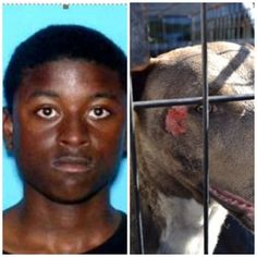 Teen accused of burning dog has been arrested