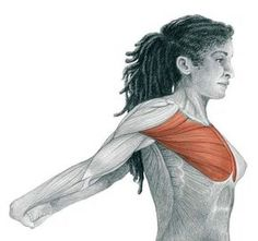 Starting Stretching – 53 Full Body Stretches for Beginners – The Health Science Journal In our previous article The Art of Stretching we presented 36 illustrations in color with stretches for specific muscles. We now continue with more illustrations … Body Stretches, Stretching Exercises, Fitness Diet, Health Fitness, Hatha Yoga, Full Body Stretch, Chest Muscles, Health Resources, Get In Shape