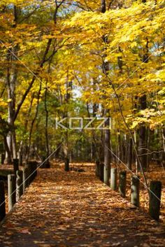 walkway and autumn trees. - View of walkway and autumn trees.