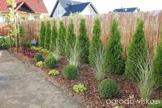 Cheap landscaping Ideas to Transform Your Yard Cheap Landscaping Ideas, Landscaping Along Fence, Outdoor Landscaping, Outdoor Gardens, Arborvitae Landscaping, Backyard Plan, Backyard Ideas, Garden Shrubs, Garden Planning