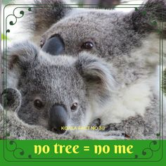 Without trees to live in and eat we wouldn't have koalas. The more trees they have, the healthier they become - pretty simple math! Simple Math, September, Cute Animals, Trees, Australia, Facts, Bear, Live, Pretty