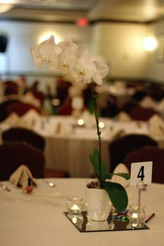 Simple white Orchid centerpieces