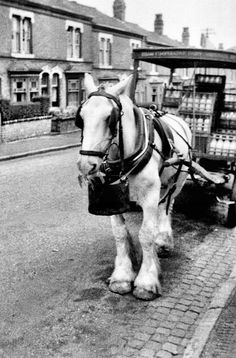 Co-op_Milk horse in Freer Road Birmingham Vintage Pictures, Old Pictures, Old Photos, London History, British History, Wales, Birmingham England, Old London, My Childhood Memories