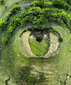 Nature look At you