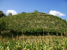 Vineyards in the Bormida Valley (Piemonte, Italy) near Bubbio, by photobeppus, via Flickr
