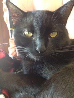 """Black cat Dexter asks, """"What?"""""""