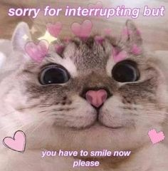 See more 'Wholesome Memes' images on Know Your Meme! Hug Meme, Cat Memes, Funny Memes, Memes Gretchen, Wholesome Pictures, Cute Love Memes, Cute Love Pics, Funny Reaction Pictures, Cute Messages