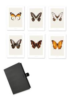 Shop Home, Furniture, Lighting, Kitchen & Art Rockett St George Rockett St George, Hagen, Butterfly Print, Kitchen Art, Fine Art Prints, Gallery Wall, Vans, Colours, Retro
