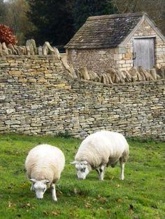 Victoria's Farm