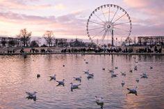 Coucher de soleil sur Les Tuileries #parisjetaime