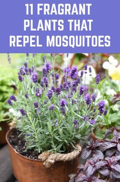 Enjoy a mosquito free summer by planting these mosquito repellent plants around your home and garden. Garden Yard Ideas, Lawn And Garden, Garden Projects, Outdoor Plants, Outdoor Gardens, Outdoor Flower Pots, Plants On Deck, Plants That Repel Bugs, Pot Jardin