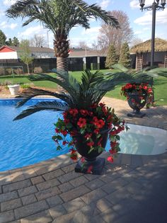 It's Artificial ! Oasis à Mirabel, Qc. Oasis, Time Of The Year, Your Space, Interior Decorating, Christmas Decorations, Exterior, Houseplants, Concept, Design