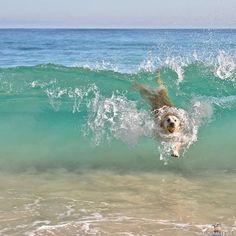 Koira aalloilla