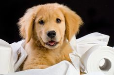 6 Tips for Puppy-Proofing Your Home   #MikeRanceRealtor #Remax200Realty…