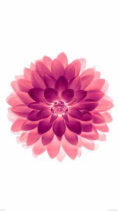Big Red Flower Blossom Art #iPhone #6 #plus #wallpaper