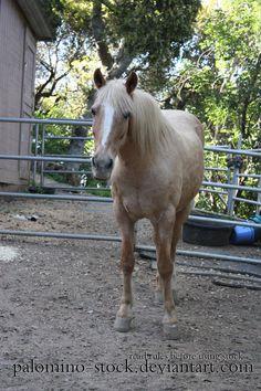074 by Palomino-Horse-Club.deviantart.com on @deviantART