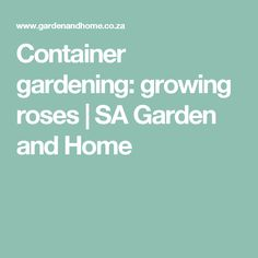 Container gardening: growing roses | SA Garden and Home