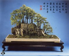 Chinese styled trees; a Penjing landscape by Yee-sun Wu. This wonderful Chinese landscape belongs to the Man Lung collection in Hong Kong. The trees are Chinese Bird Plums (Sageretia Theezans) and together make up a very realistic scenery. The trees, rock and miniature figurines are placed on a shallow rectangular pot (made of marble), which in turn is displayed on an antique table.
