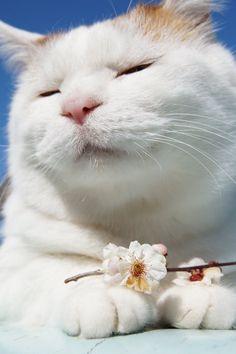 のせ猫オフィシャルブログ Powered by Ameba