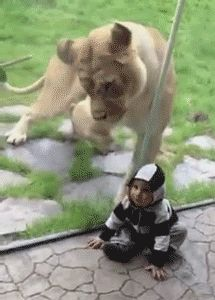 19 GIFs of Animals Knocking Out Kids Because We All Need This Right Now from GifGuide