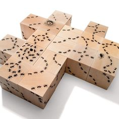 The fun never stops with these delightful ant blocks. Trails of ants connect on all six sides of these sixteen blocks, forming never-ending patterns for your kids to explore.     Each set contains images of ant hills, a queen with her eggs, and a spider, the ant's nemesis.