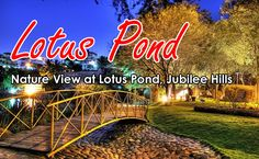 Lotus Pond is a minor water form inside MLA Colony, Jubilee Hills, Hyderabad, India. The pond is bounded by lush green flora and a 1.2 kilometer path. Lotus Pond is home to more than 20 species of birds.