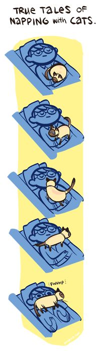 True tales of napping with cats.