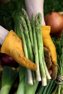 Growing asparagus requires patience but male vegetable, is the result worth it. this durable plant will result a bountiful harvest year after year for up to 30 years. Perennial Vegetables, Organic Vegetables, Growing Vegetables, Perennial Plant, Asparagus Roots, Asparagus Plant, Bountiful Harvest, Growing Seeds, Gardening Tips