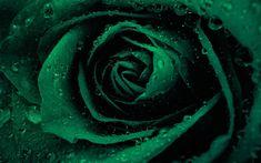 Loki Aesthetic, Dark Green Aesthetic, Slytherin Aesthetic, Rainbow Aesthetic, Harry Potter Aesthetic, Aesthetic Colors, Flower Aesthetic, Aesthetic Pictures, Dark Green Wallpaper