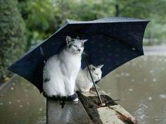 Katzen und Wasser