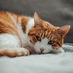 Na da ist aber jemand noch müde 😴 Der Keks 🍪 schläft einfach am besten, wenn er sich ganz eng an den Rücken des 🐵👑 drücken und die Mama beim Schlafen beobachten kann 😂 dezent creepy, aber er ist einfach viel zu süß 🥰⠀ —————————————————————————kittensdaily #meows #9cattagram #kittys #cats_today #happycats #catloversworld #cutecatskittens #pleasantcats #balousfriends #bestmeow #cutecats #lovemycat #cats_mylove #happycatclub  #catsofig #meowdels #katzenleben #purrpurrpurr… Creepy, Animals, Instagram, Cookie, Cats, Simple, Animales, Animaux, Animal