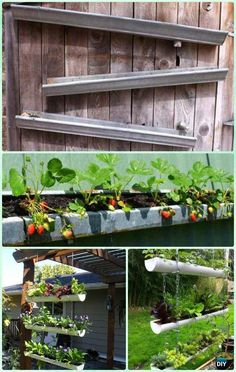 DIY Rain Gutter strawberry Planter Box Instruction-Gardening Tips to Grow Vertical Strawberries Gardens