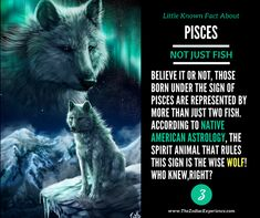 Little Known Fact About - Pisces - Believe it or not those born under the sign of are represented by more than just two fish. According to Native American Astrology the Spirit Animal that rules this sign is actually the wise WOLF! Who knew right? Pisces Traits, Pisces And Aquarius, Astrology Pisces, Zodiac Signs Pisces, Pisces Love, Pisces Quotes, Pisces Woman, All About Pisces, Zodiac Star Signs