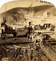 A Klondike dog team in 1899 Dawson city, Yukon