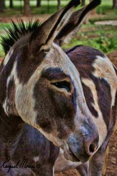 What unusual markings for a donkey. Beautiful!
