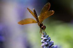 134 Terrifying Close-Ups Of Bugs